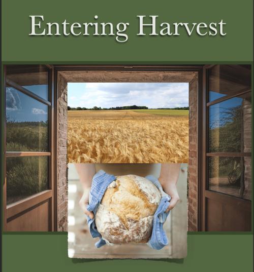 Entering Harvest